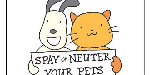 Low Cost Spay & Neuter Services